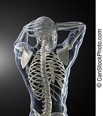 körper prüft, medizin, zurück, menschliche , ansicht