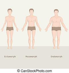 Körpertypen.