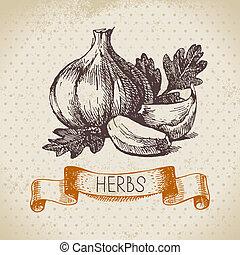 Küchen Kräuter und Gewürze. Vintage Hintergrund mit hand gezeichnetem Knoblauch