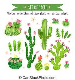kaktus, satz, verschieden, succulents.