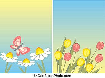 Kamille und Tulpe