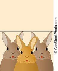kaninchen, drei