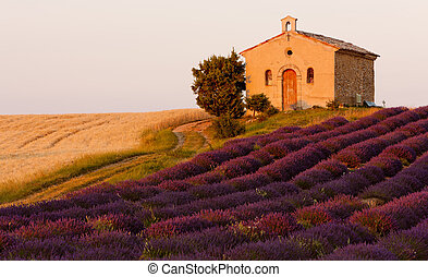 Kapelle mit Lavendel und Getreidefeldern, Plateau de Valensole, Provence, Frankreich
