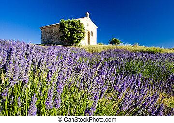 Kapelle mit Lavendelfeld, Plateau de valensole, Pronce, france