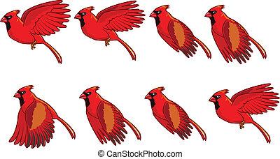 Kardinal Vogelfliegende Animation.