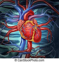 kardiovaskulär, herz, menschliche