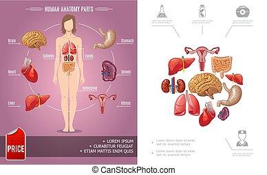 Kartoon menschliche Anatomie buntes Konzept.