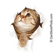 Katze in Papierloch
