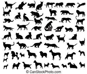 Katze und Hund.