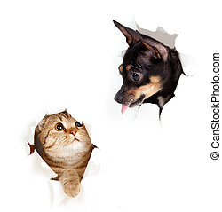 Katze und Hund in Papierseite haben ein Loch isoliert
