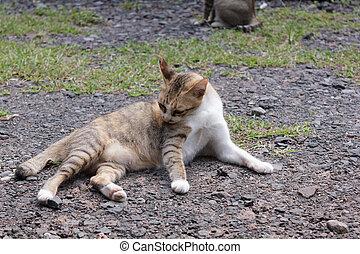 Katzen liegen auf dem Boden.