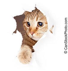 Katzen suchen in der Papierseite zerrissen Loch isoliert.