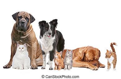 Katzen und Hunde.
