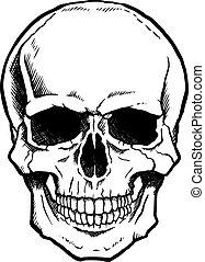 kiefer, weißes, schwarz, menschlicher schädel