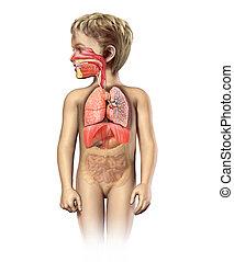 Kinder-Anatomie kompletter Atemweg unterbrochen.
