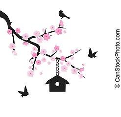 Kirschblüte.