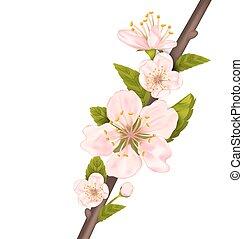 Kirschblüte schließen, Baumzweig.