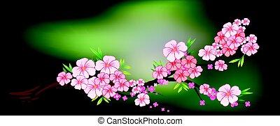 Kirschblüten auf dem Ast.