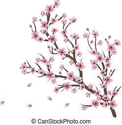 Kirschblütenzweig.