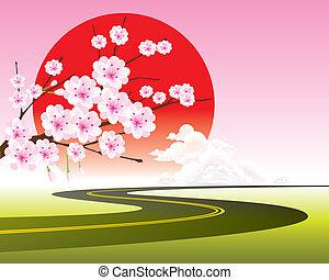Kirschblütenzweige auf dem