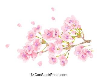 kirschen, aquarell, abbildung, blüte