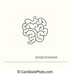 Kleine Darm-Ikone isoliert. Ein dünnes Liniensymbol der Verdauung. Menschliche Anatomie skizziert Piktogramm