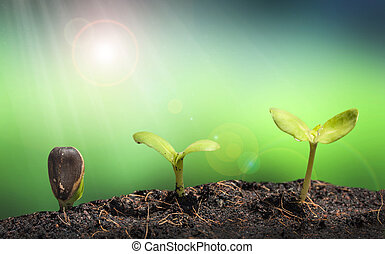 Kleine Pflanze auf dem Bodenhaufen mit Lens Fackel, grünes Naturkomplot.
