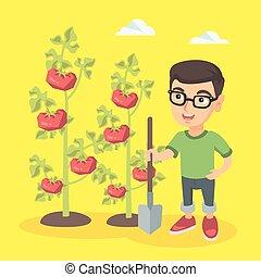 Kleiner kaukasischer Farmerjunge, der Tomaten kultiviert.