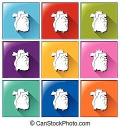 Knöpfe mit Herzorganen.