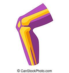 knee., menschliche , abbildung