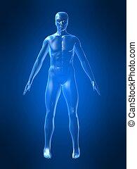 koerper, form, menschliche