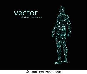 koerper, vektor, abbildung, menschliche