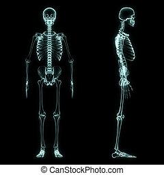 koerper, voll, skelett, röntgenaufnahme