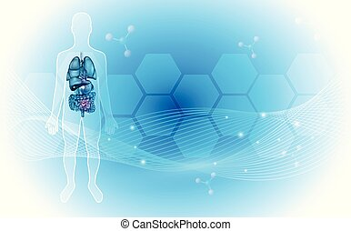 koerperbau, innere organe, menschliche , hintergrund