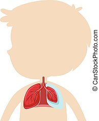 koerperbau, lunge, menschliche