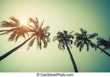 Kokospalme am Strand im Sommer mit Vintageeffekt.