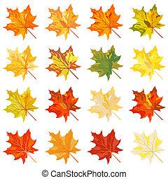 Kollektion der Herbstblätter