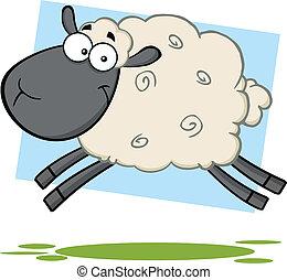 Komische schwarze Schafe springen.