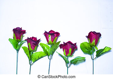 Konzept Fotoshooting Valentinstag mit roter Rose.