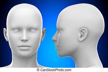 kopf, -, abbildung, weibliche , leer, front, weißes, ansicht, seite, 3d