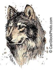 kopf, aquarell, wolf, porträt, spritzen