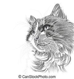 Kopf einer grauen Katze.