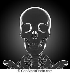 kopf, skelett, menschliche