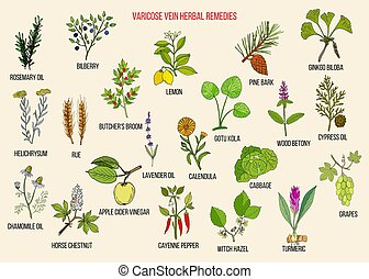 kräuter, heilmittel, varicose, vene