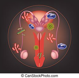 krank, mann, system, reproduktiv