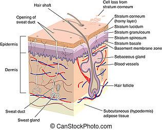 Kreuze Teile menschlicher Haut