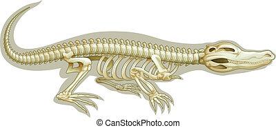 krokodil, system, skelettartig