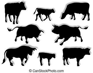 Kuh, Stier und Kalb in Silhouette.