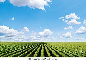 Kultiviertes Feld