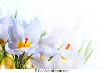 Kunstschöne Frühlingsblumen auf weißem Hintergrund